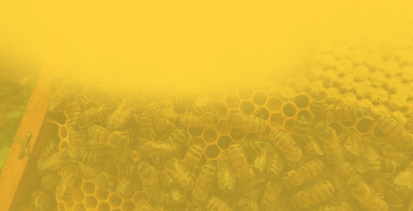 Fond ruche